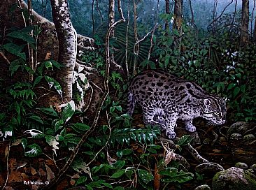 Aquatic cat - Fishing cat portrayed in rainforest habitat by Pat Watson