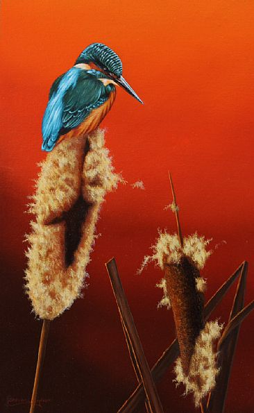 Evening Vigil - Common Kingfisher by Steven Lingham