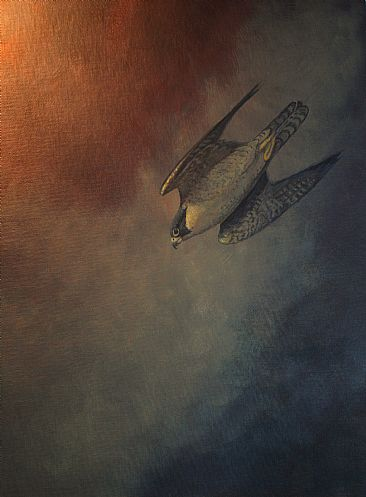 Hot Pursuit - Peregrine falcon by Raymond Easton