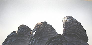Natural Order - Black vultures by Raymond Easton