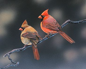 Ruby's Tuesday - Northern cardinals by Raymond Easton