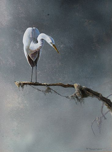 Everglades Encounter - Great egret by Raymond Easton