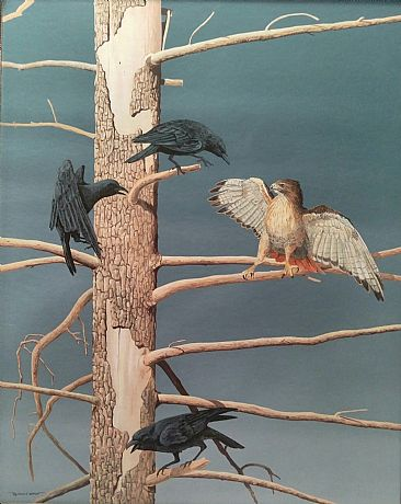 Morning Menace - Crows & Red Tailed Hawk by Raymond Easton