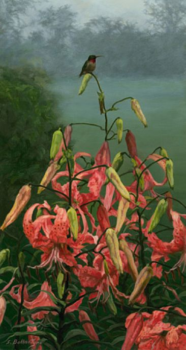 A New Day - Tiger Lilies and Hummingbird by Sheila Ballantyne