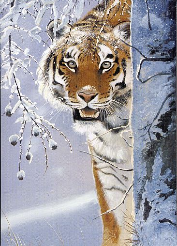 Amur Tiger Painting Art By Pollyanna Pickering