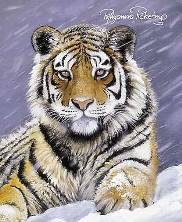 Land of the snow Tiger - Amur Tiger by Pollyanna Pickering