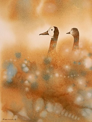 Heads Up - White-faced Ducks by Alison Nicholls