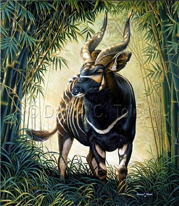 Bongo of the Aberdare Forest - Aberdare Bongo by Daniel Toledo