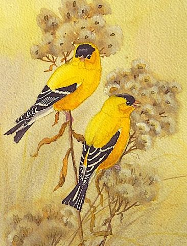 American Goldfinches - American Goldfinches by Sid Frissell