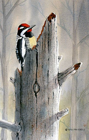 Sapsucker on a Snag - Red-naped Sapsucker by Sid Frissell