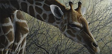 Amongst The Thorns - Giraffe by Edward Spera