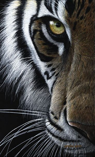 Eye Of India - Bengal Tiger by Edward Spera