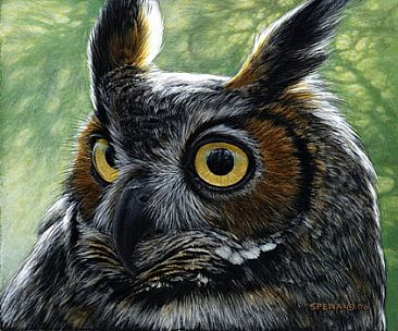 Great Horned Owl - Great Horned Owl by Edward Spera