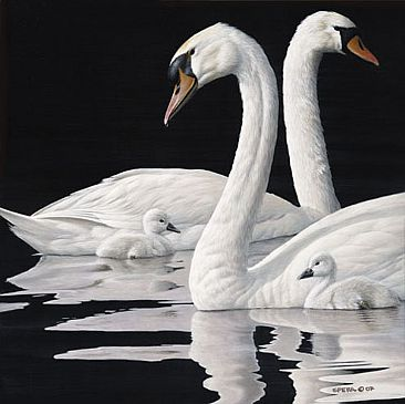 Henley's Royal Family - Mute Swans by Edward Spera