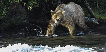 Katmai - Grizzly Bear by Edward Spera