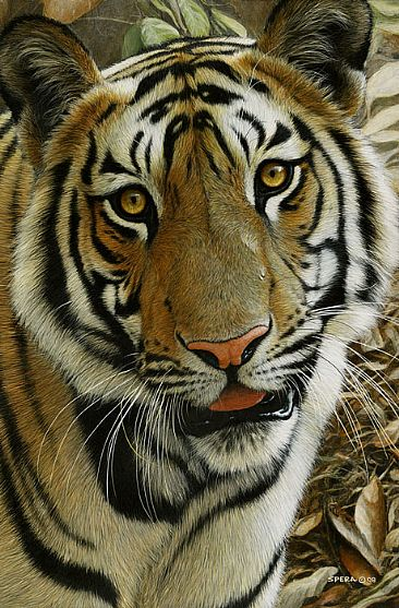 Mischief - Tiger by Edward Spera
