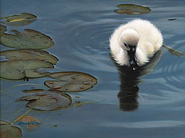 My Second Day - Baby Mute Swan by Edward Spera