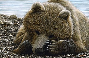Time To Rest - Grizzly by Edward Spera