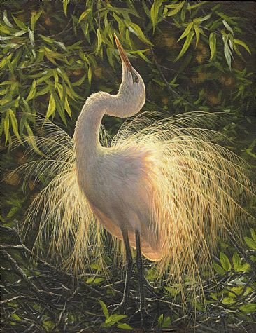 Courtship - great egret (sold) by Beth Hoselton