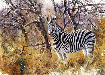 Aird Beauty - African Wildlife by Peter Blackwell
