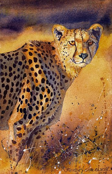 Golden Glory - African Wildlife by Peter Blackwell