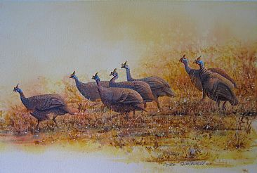Golden Guineas - African Wildlife by Peter Blackwell