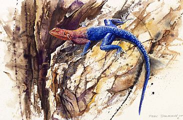 Agama Lizard - African Wildlife by Peter Blackwell