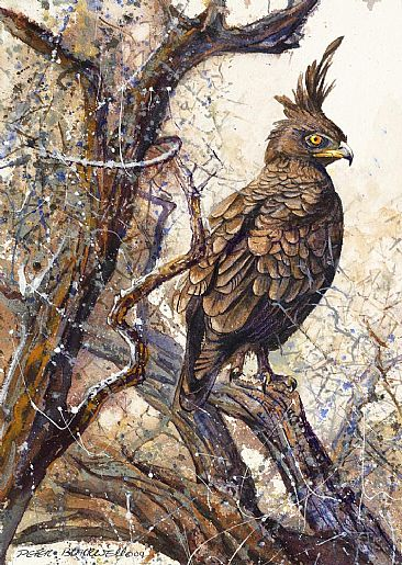 Long-Crested Eagle - African Birds by Peter Blackwell