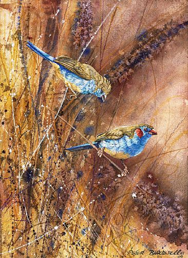 Seed Stalkers - African Birds by Peter Blackwell