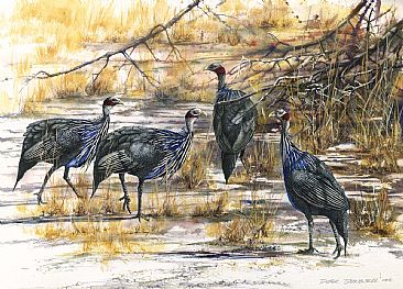 Vulturine Guinea Fowl - African Birds by Peter Blackwell