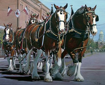 Parade Stars - Clydesdales in the Cheyenne Frontier Days Parade by Tom Altenburg