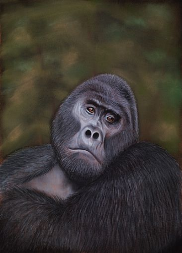 Rwansigazi - The Strong Young Man - Mountain Gorilla by Edward Hobson
