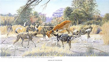 Survival of the Species - Painted African Dog by Chris McClelland