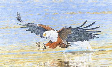 A Masterful Approach - African Fish Eagle by Chris McClelland