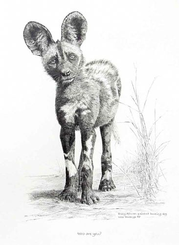 Who Are You? - A young African Painted Dog pup by Chris McClelland