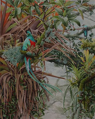 Quetzal | Lost in the Profusion - Resplendent Quetzal by Daniel Davis