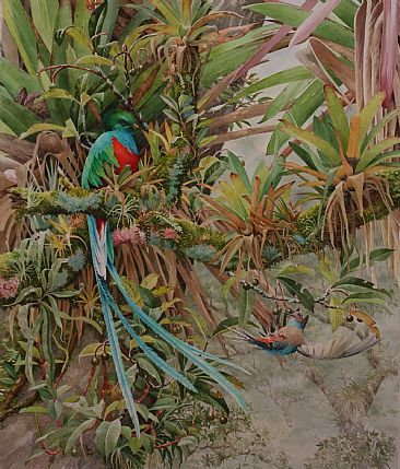 Quetzal | Breakfast on the Wing - Resplendent Quetzal by Daniel Davis