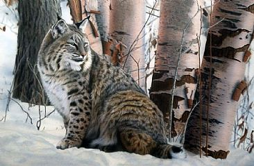 Silent Watch - Bobcat by Tim Donovan