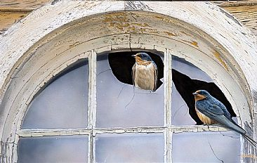 Window Shopping - Barn Swallows by Tim Donovan