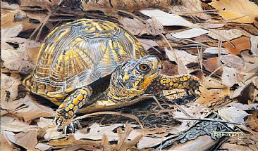 Slow but Sure - Box Turtle by Tim Donovan