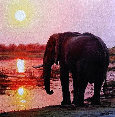Elephant in sunset - Elephant by Jason Morgan