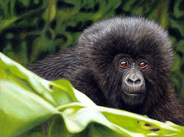 New Beginning - Infant Mountain Gorilla - Gorilla Infant by Jason Morgan
