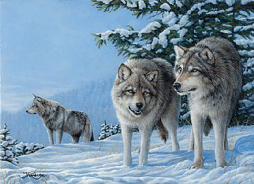 WOLF - Wolf by Claude Thivierge