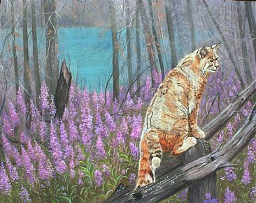 Fire Recovery - Bobcat with Fireweed in Okanagan Mountain Park by Theresa Eichler