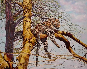 Leopard Fever SOLD - leopard in fever tree - Serengeti by Theresa Eichler