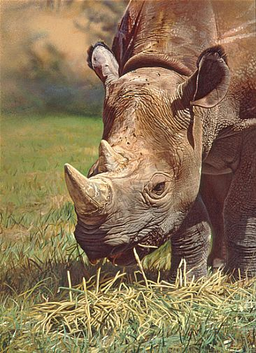 KUSAMONA (first born) - BLACK RHINO by Stephen Jesic