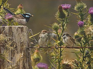 MORNING HARVEST - SUPERB BLUE WRENS by Stephen Jesic