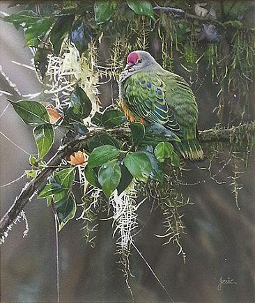 CATCHING THE LIGHT - ROSE CROWNED FRUIT DOVE by Stephen Jesic