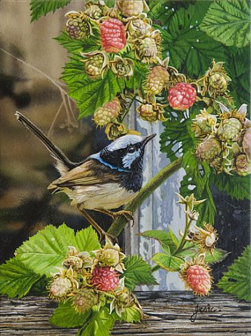 RASPBERRY DELIGHTS - SUPERB BLUE WREN by Stephen Jesic