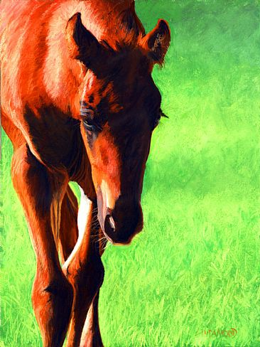 Nosing into the World - Foal by Patsy Lindamood